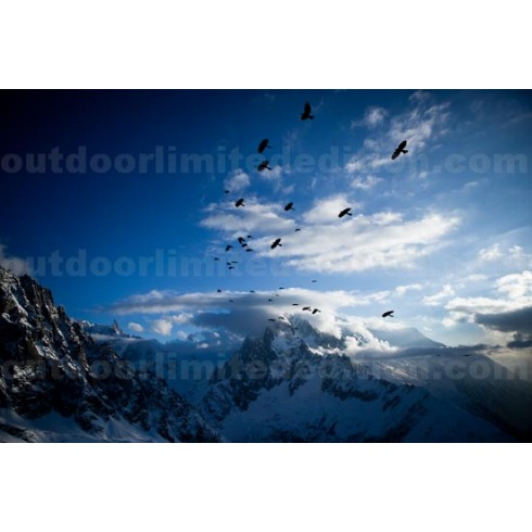 Crows flying high over Mont blanc
